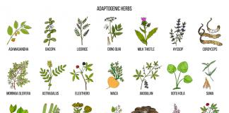 Plantes adaptogènes bienfaits
