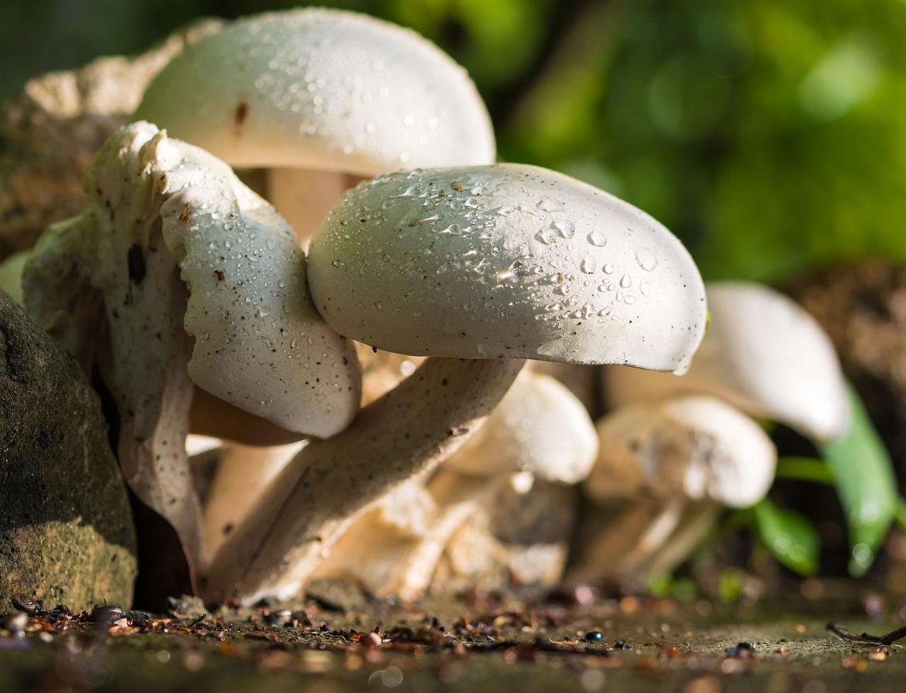 santé des champignons sur notre système nerveux