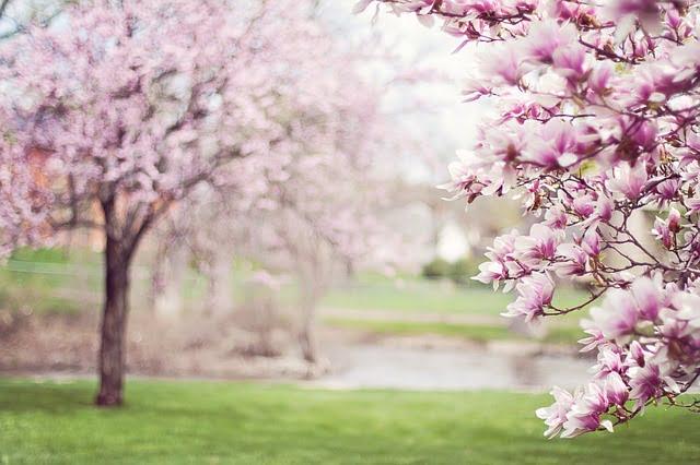 maladies en printemps