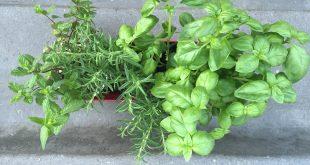 régime belle plante