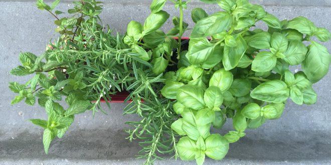 Régime belle plante : 5 herbes aromatiques de perte de poids