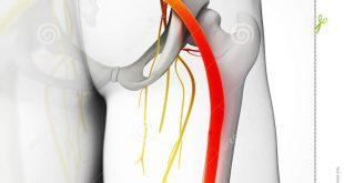 nerfs sciatiques