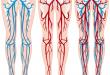 Comment améliorer la circulation sanguine dans les jambes ?