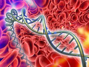 Mutation génetique