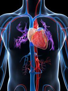 baisse tension artérielle