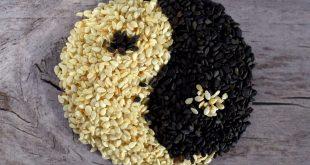 graines de sésame pour maigrir
