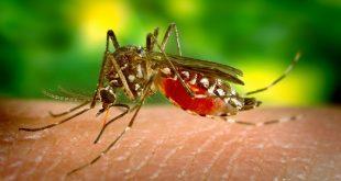 fièvre dengue