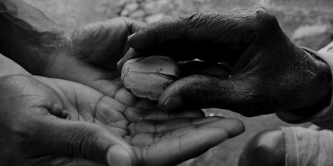 Ce qu'il faut retenir sur les effets de la noix de kola