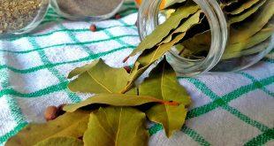feuilles de laurier