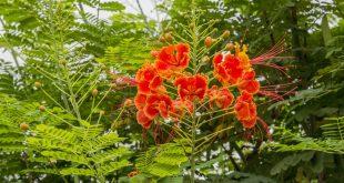 une plante médicinale aux multiples vertus